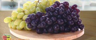 Виноград-чёрный-и-зелёный