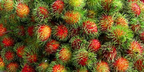 рамбутан-фрукт