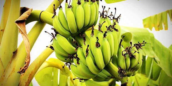 виды-фруктов