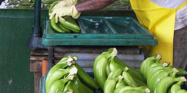 мойка-бананчиков