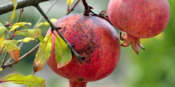 Больной-плод