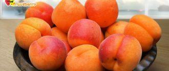 Плоды-абрикосов