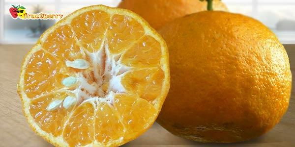 горький-апельсин