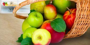 Сорта-яблок