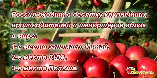 Яблоки самый полезный плод