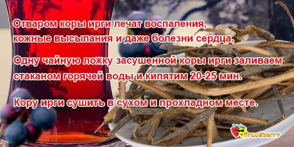 кора-ирги-ягоды