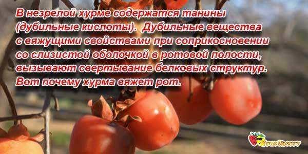 фрукт хурма