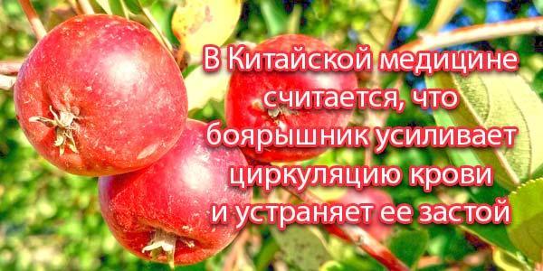 Китайские-ягоды