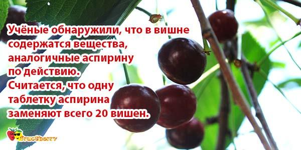 ягоды вместо аспирина