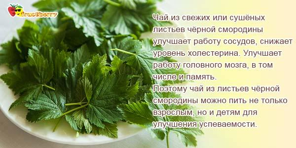 Чай из листьев смородины черной
