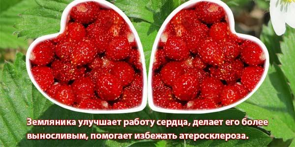 лесная ягода для сердца
