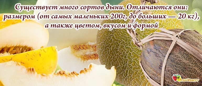 сорта бахчевых
