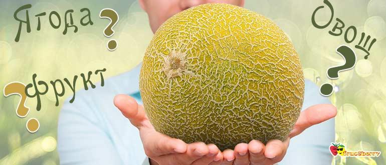 Дыня это фрукт