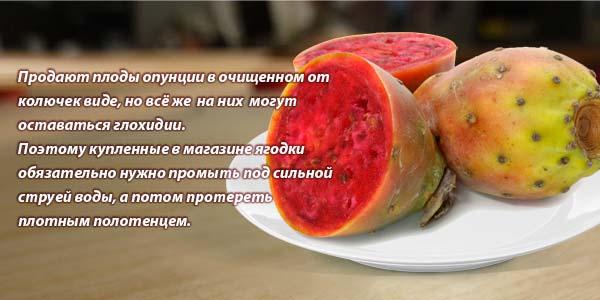 Кактус опунция- лечебные свойства масла, плодов, настойки, польза и вред, применение