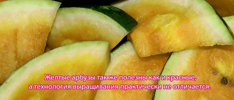 арбузы желтые
