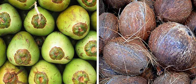 кокосы зелёные