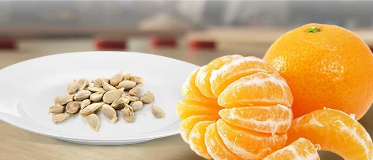 косточки мандаринов