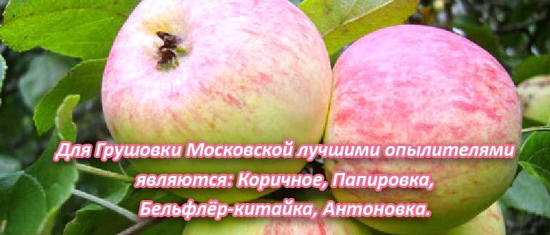 яблоко грушовка опылители