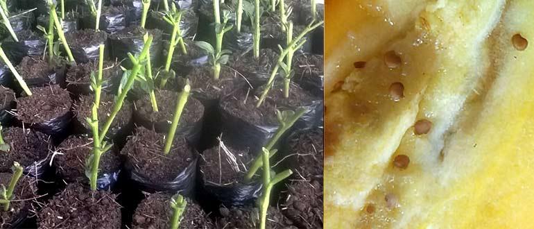 посев семенами,черенками