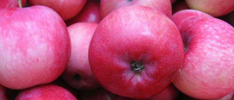 мельба яблоко