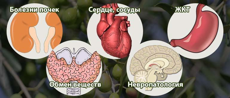 оливки в медицине