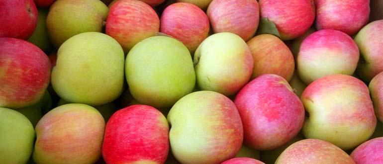 слава победителю яблоки