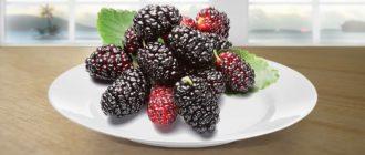 шелковица ягода