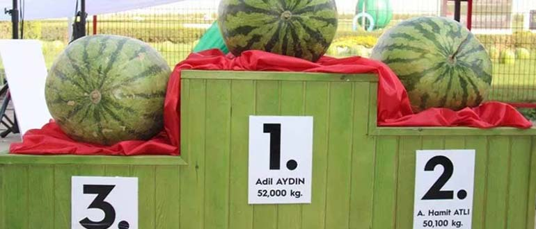 фестиваль арбузов