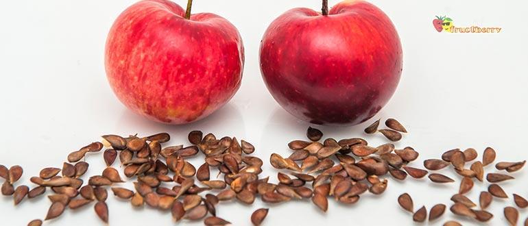 косточки яблок