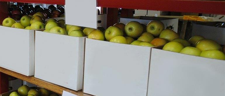 хранение на стеллажах яблок