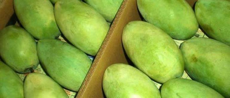 Лангра манго