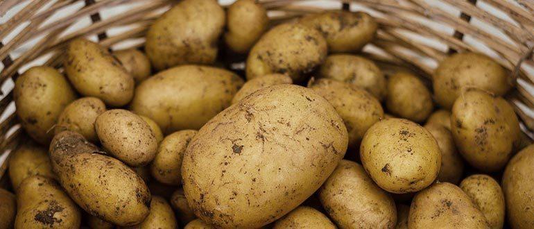 картофель калорийность
