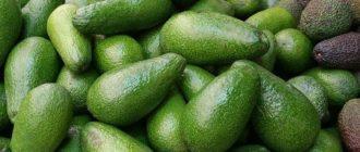 сорта авокадо