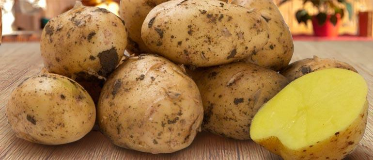 Гала картофель фото