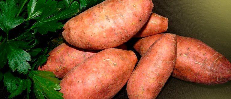 Батат сладкий картофель