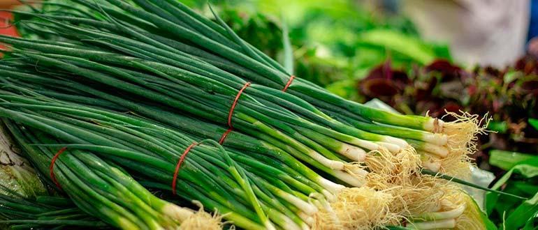Зеленый лук фото